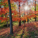 Andrea Linderman's photo